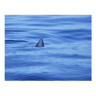 Shark swimming in ocean water postcard