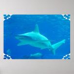 Shark Swimming Poster
