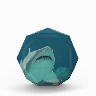 Shark Teeth Acrylic Award