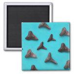 Shark Teeth Fridge Magnets
