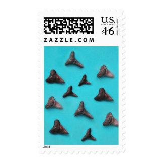 Shark Teeth Stamps
