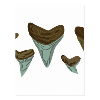 Shark Teeth Postcard