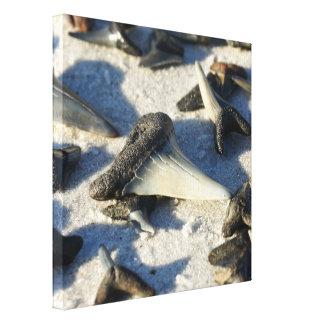 Shark Tooth Canvas Canvas Print