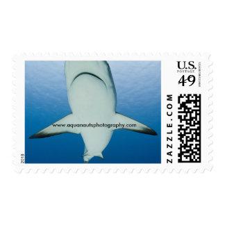 Shark Underbelly Postage Stamps