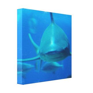 Shark Underwater Canvas Print