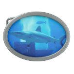 Shark underwater! oval belt buckles
