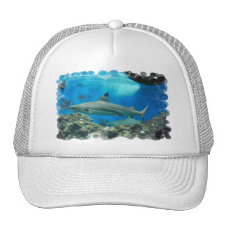 Shark with Reef Baseball Hat