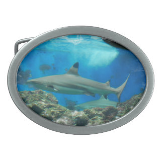 Shark with Reef  Belt Buckle