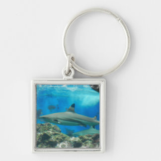 Shark with Reef  Keychain