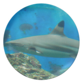 Shark with Reef Plate