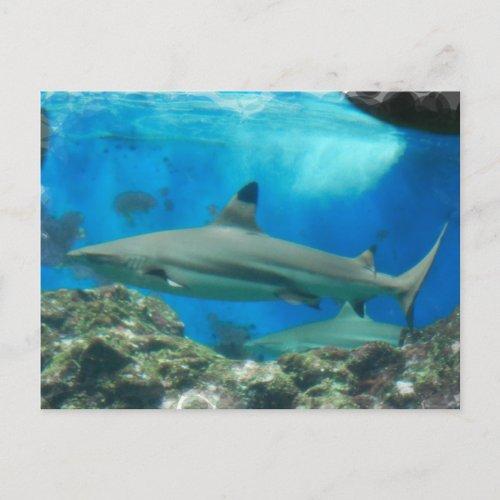 Shark with Reef Postcard