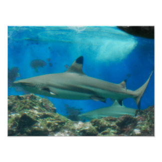 Shark with Reef Poster