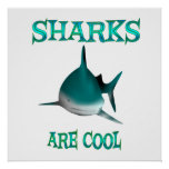 Sharks are Cool Poster