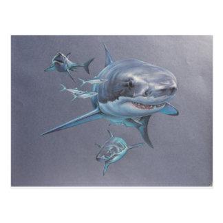 Sharks at Bay Postcard