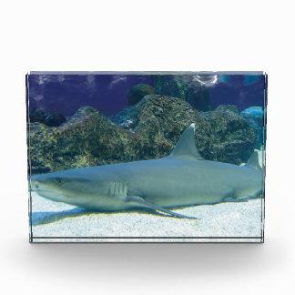 Sharks Acrylic Award
