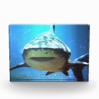Sharks Award