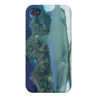 Sharks in Coral Reef iPhone 4 Case