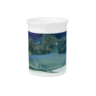 Sharks in Coral Reef Pitcher