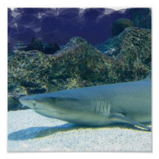 Sharks in Coral Reef Poster Print