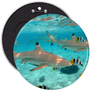 Sharks in the Bora Bora lagoon Button