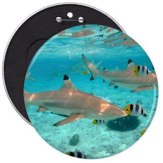 Sharks in the Bora Bora lagoon Button