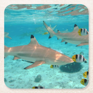 Sharks in the Bora Bora lagoon coaster