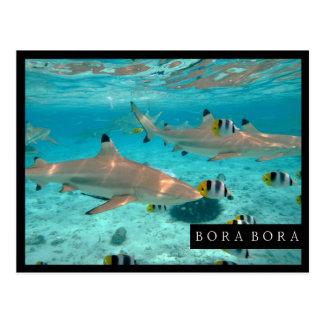 Sharks in the Bora Bora lagoon frame postcard