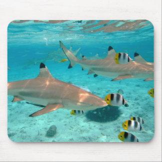 Sharks in the Bora Bora lagoon mousepad