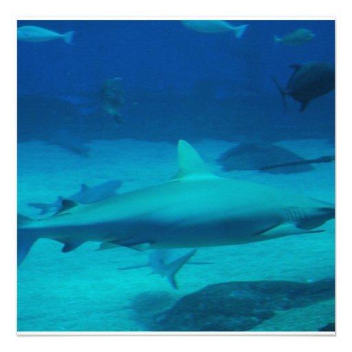 Sharks Invite