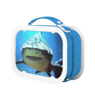 Sharks Lunchbox