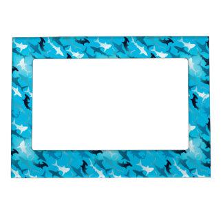 sharks! picture frame magnets