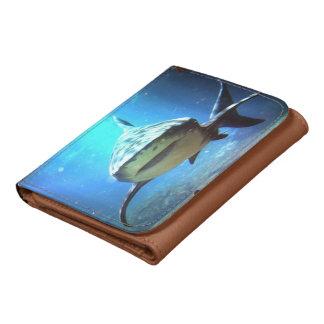 Sharks Wallets
