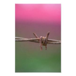 Sharp Colors. Photo Print