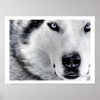 Sharp Eyed Wolf Poster