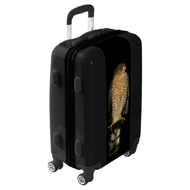 Sharp Shinned Hawk Bird Black Luggage