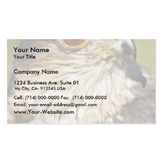 Sharp-shinned Hawk Double-Sided Standard Business Cards (Pack Of 100)
