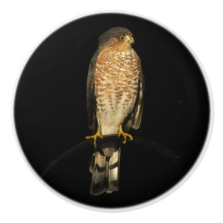 Sharp-Shinned Hawk Ceramic Knob