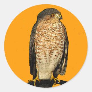 Sharp-Shinned Hawk Classic Round Sticker