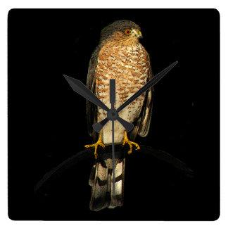 Sharp-shinned Hawk Clock