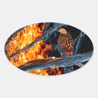 Sharp Shinned Hawk Fire and Ice. (0112) Sticker
