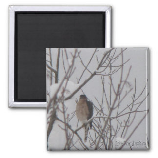 Sharp-Shinned Hawk Magnet 2 Inch Square Magnet