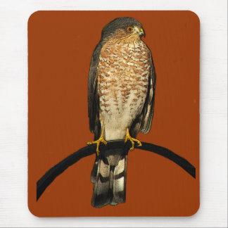 Sharp-shinned Hawk Mouse Pad