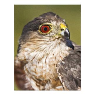 Sharp-shinned Hawk Personalized Flyer