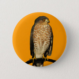 Sharp-Shinned Hawk Pinback Button