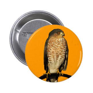 Sharp-Shinned Hawk Pinback Button