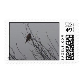 Sharp Shinned Hawk Postage