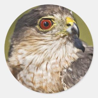 Sharp-shinned Hawk Sticker