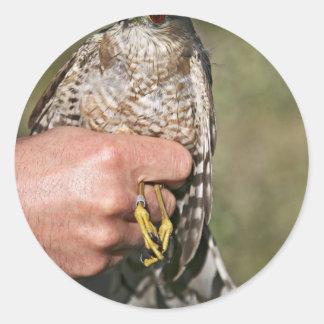 Sharp-shinned Hawk Round Stickers