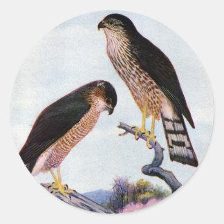 Sharp-shinned Hawks Round Stickers