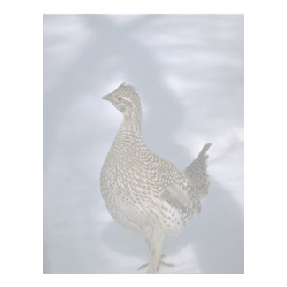 Sharp-tailed grouse personalized letterhead